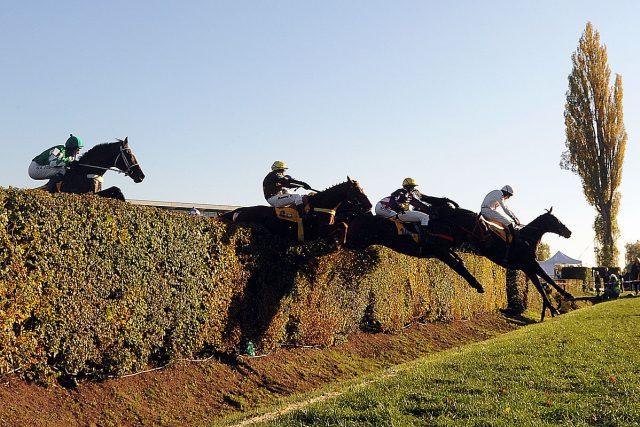 Koně na Velkém Taxisově příkopu | foto: Filip Jandourek,  Český rozhlas